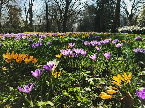 76/365 Yesterday's spring