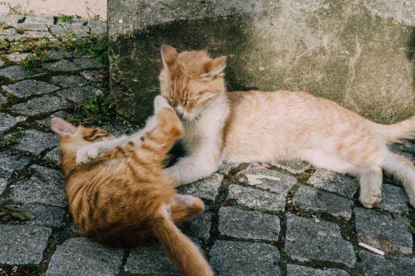 58/366 Kitties of Istanbul